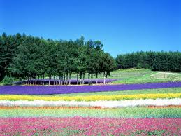 Photo Source: tw.visit hokkaido.jp